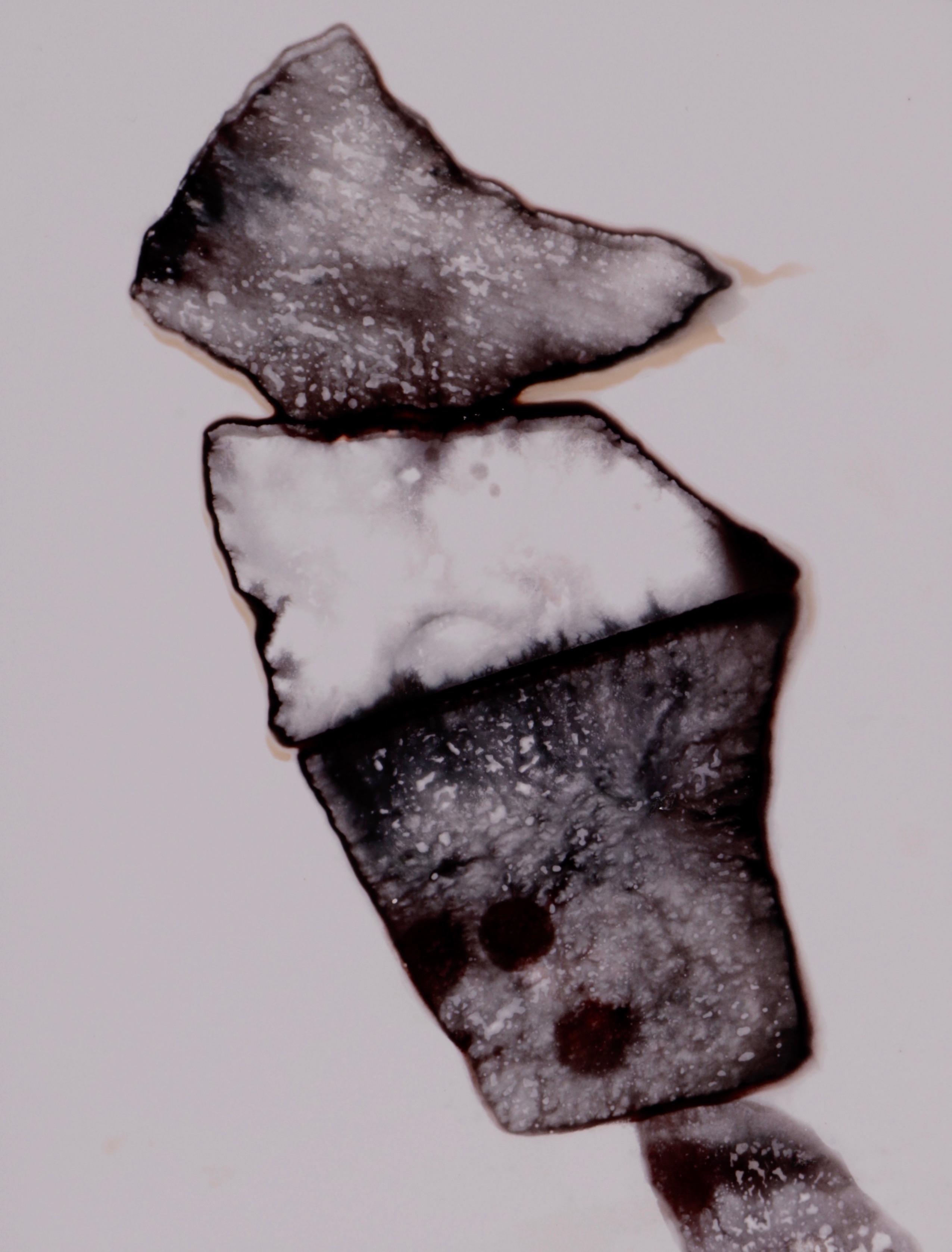 Earth no. 36 (2002) - Ilan Wolff