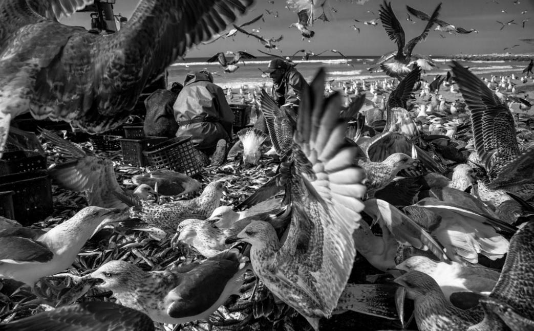 Natureza Exuberante (2017) - Luiz Moreira