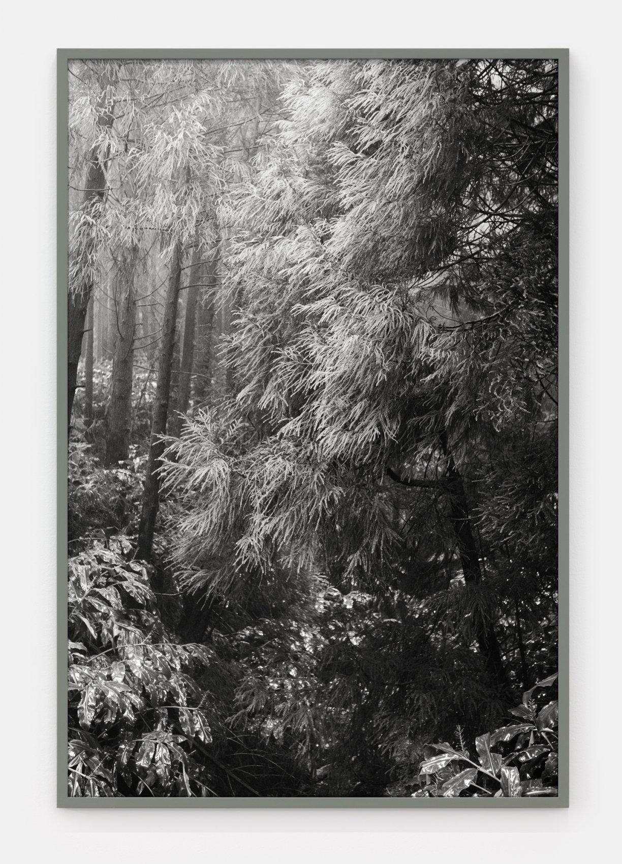 Sem Título/Untitled (Slow Atlas) (2019) - Marco Pires