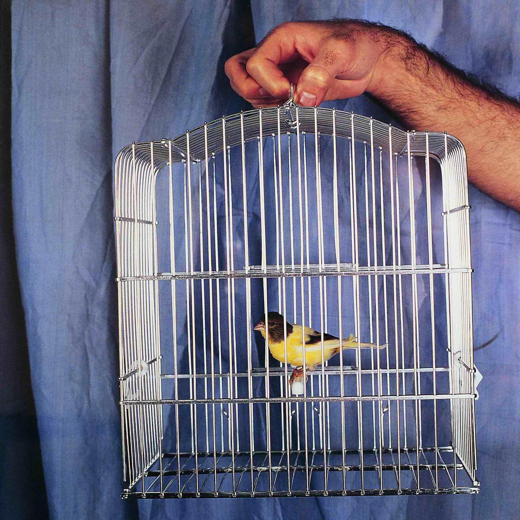 Una canaria más (1995) - Juan Hidalgo Codorníu