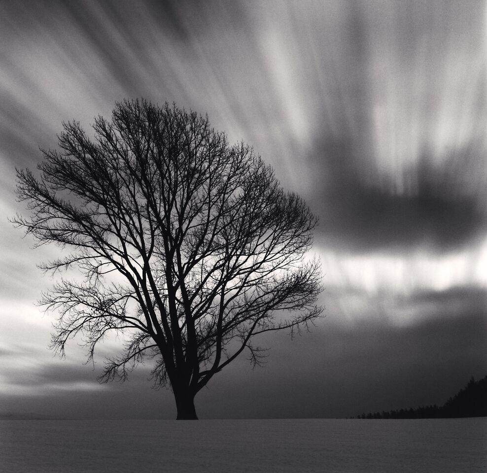 Philosopher's  Tree,  Study  3,  Biei,  Hokkaido,  Japan (2009) - Michael Kenna
