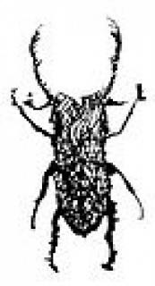 Arte El Escarabajo México