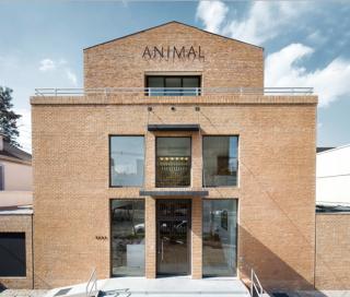 Galería Animal