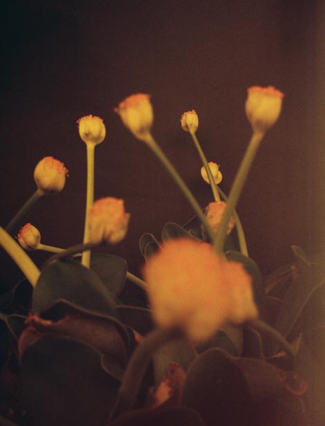 Succulent Bloom II (2017) - Kate Bellm