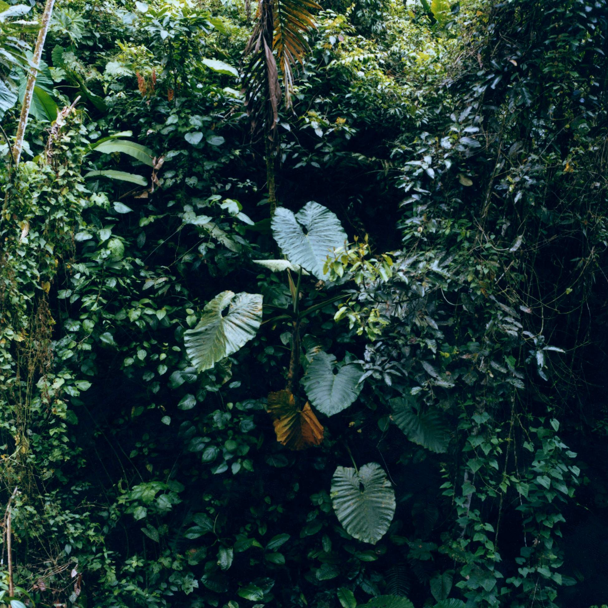 Betata. Madre de las semiilas (2015) - Karen Paulina Biswell