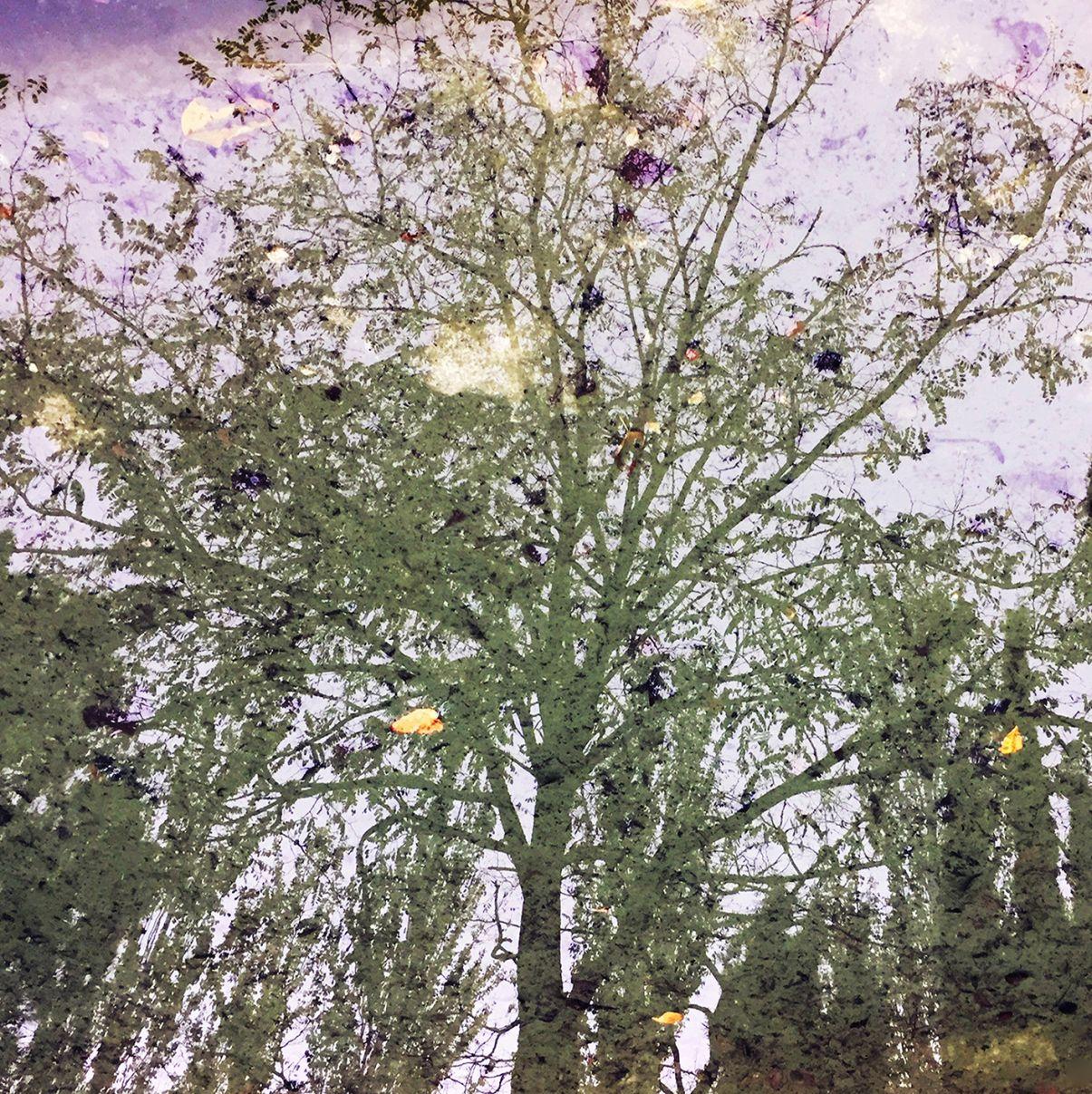 Solo Escuchan los Árboles VI (2019) - Mayte Oliver