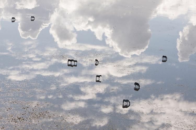 Caballos en el cielo