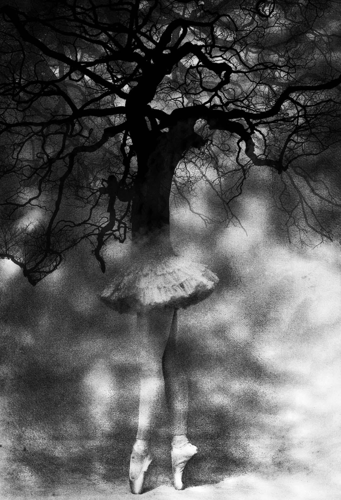 When trees dream
