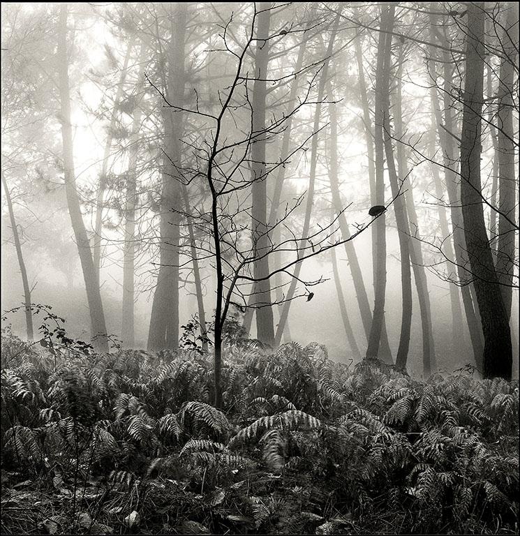 Neblinas, Sierra Blanca