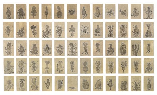 Cronología ilustrativa de la piña del siglo XVI al siglo XX