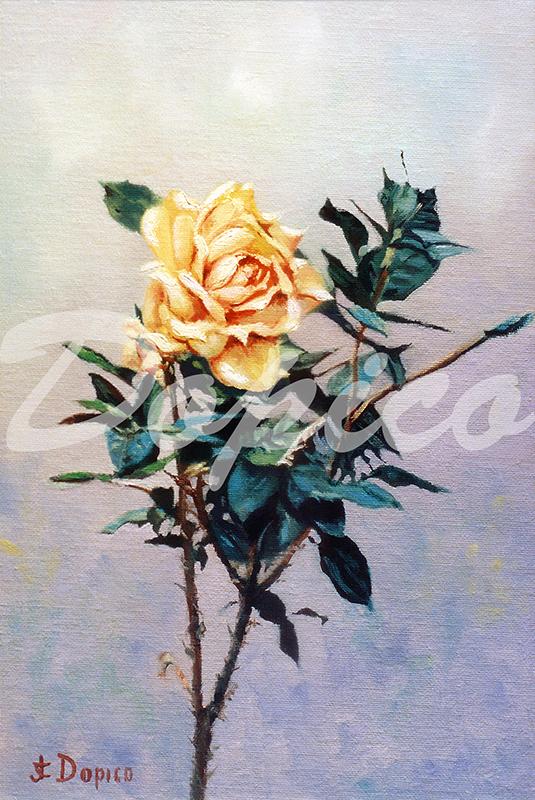 Rosa/Rose. (1900) - José Castro Dopico