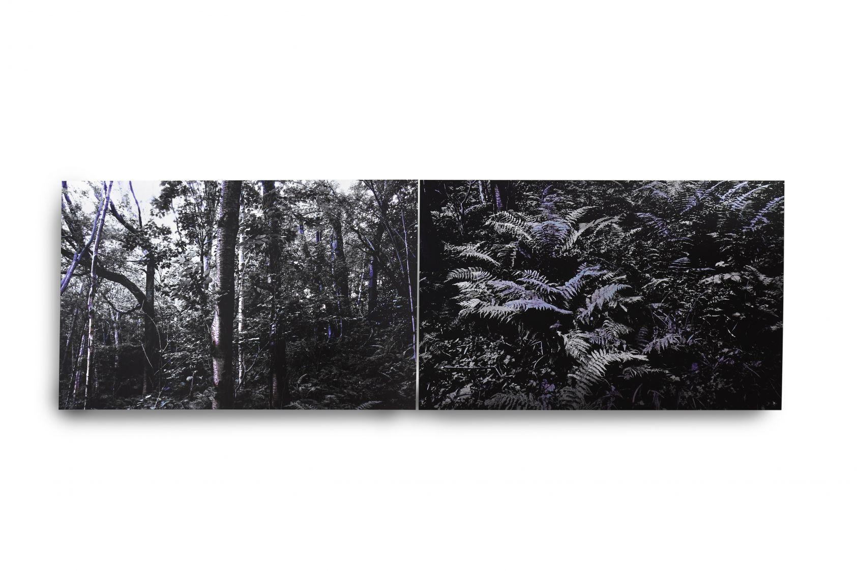 Bosques Alterados (2017) - Mirta Gendin
