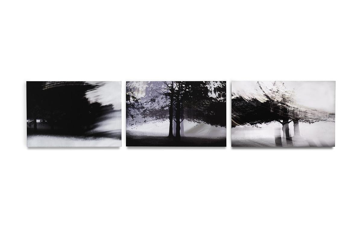 bosque niebla (2018) - Mirta Gendin