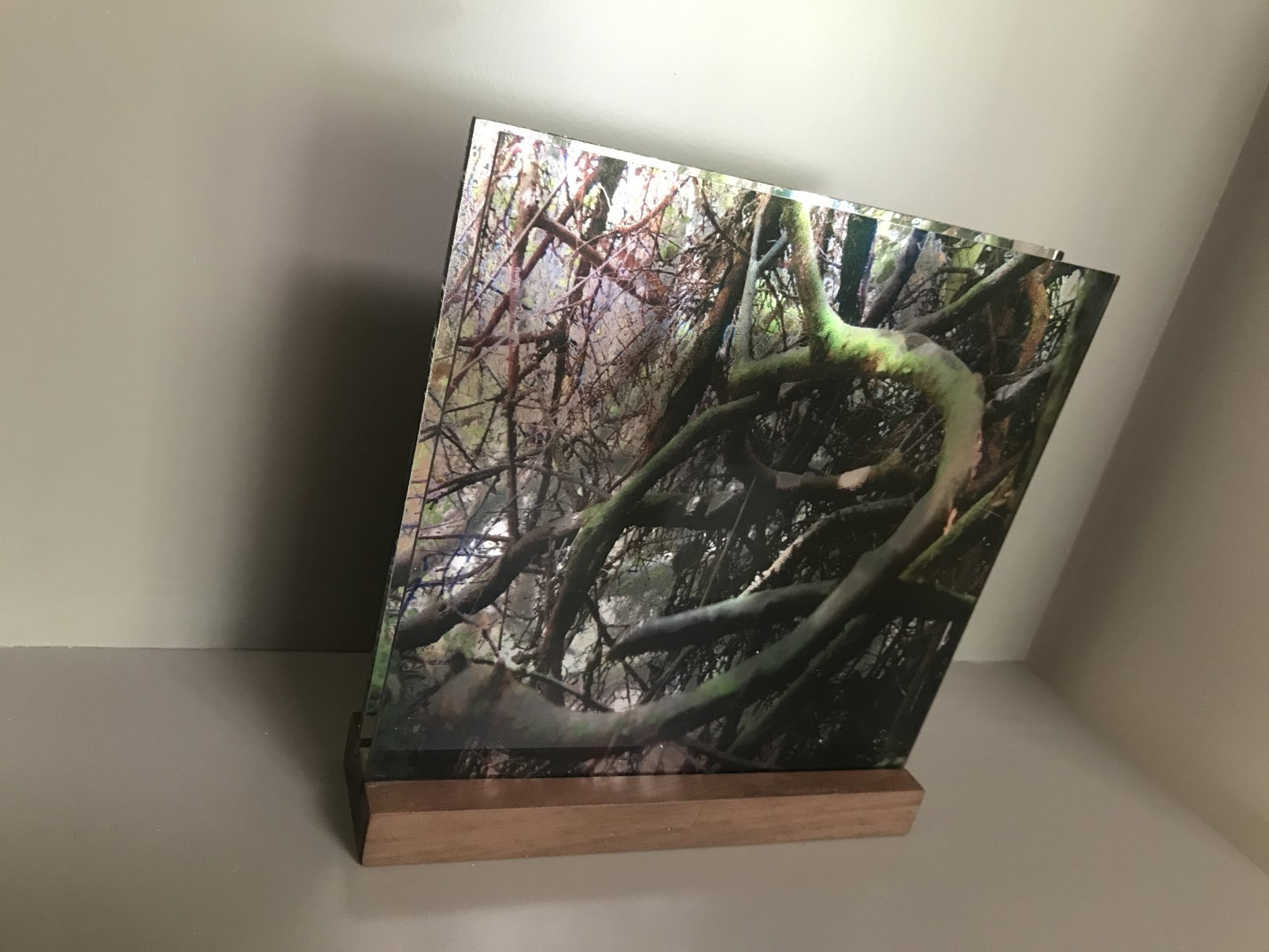 De la serie Bosques (2017) - Mirta Gendin