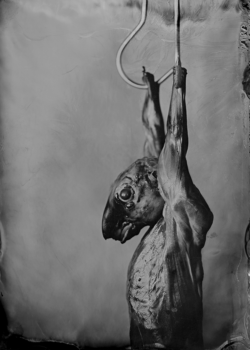 Ànima (2014) - Lola Montserrat
