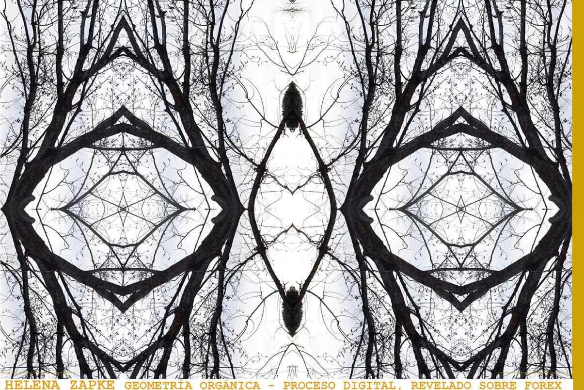 geometría orgánica (2017) - Helena Zapke Rodriguez