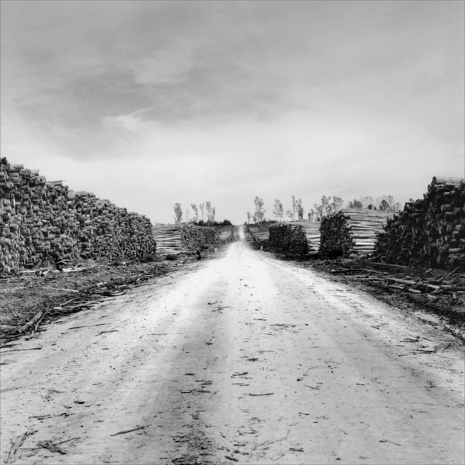 Camino (2018) - José Risso Florio