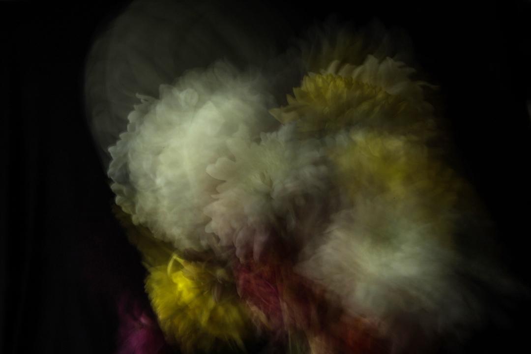 "Serie ""Natura Rota II "" (2018) - Lara Ginhson"