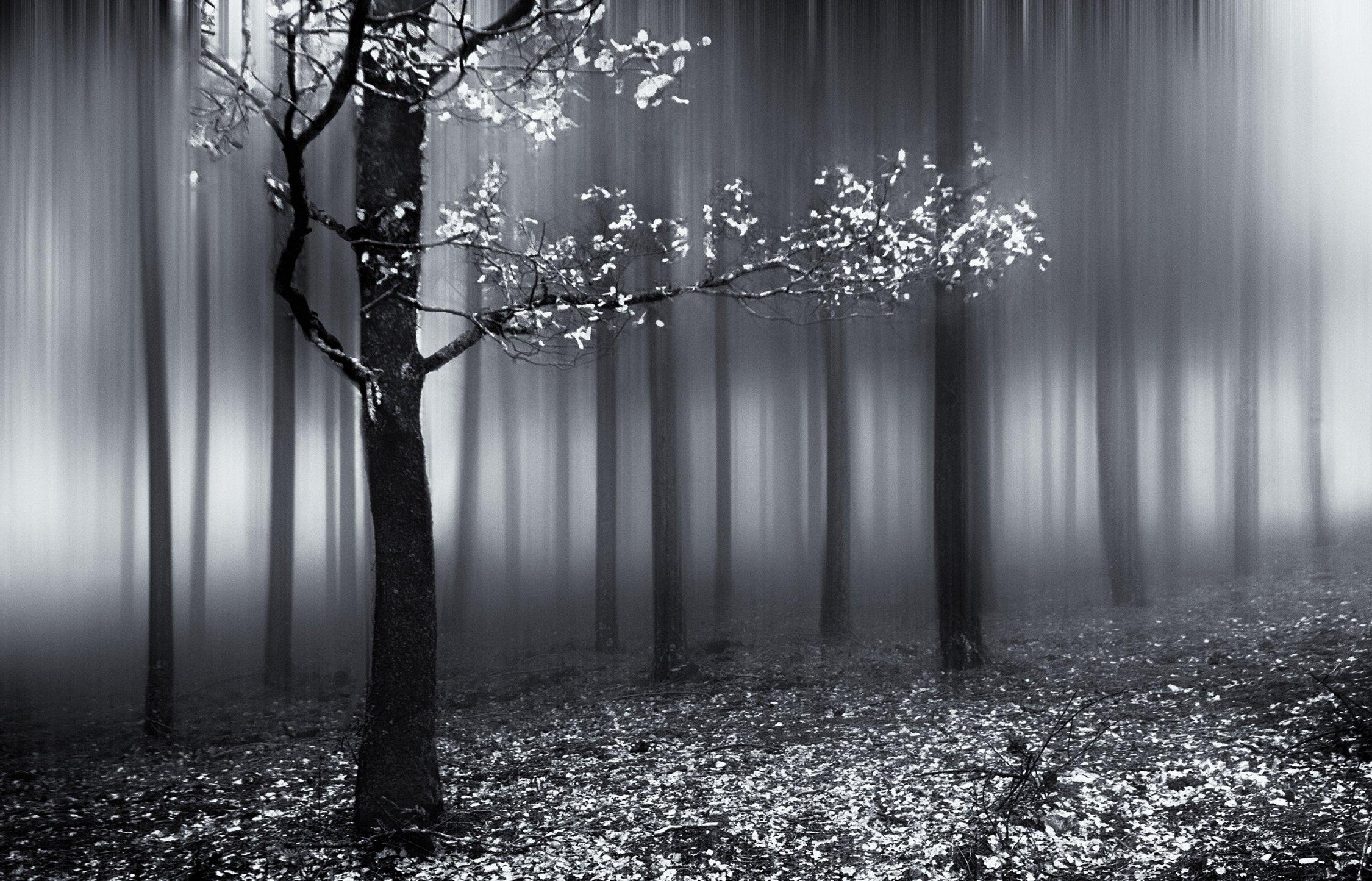 Silver tree (2016) - Mercedes Cuesta Mateo