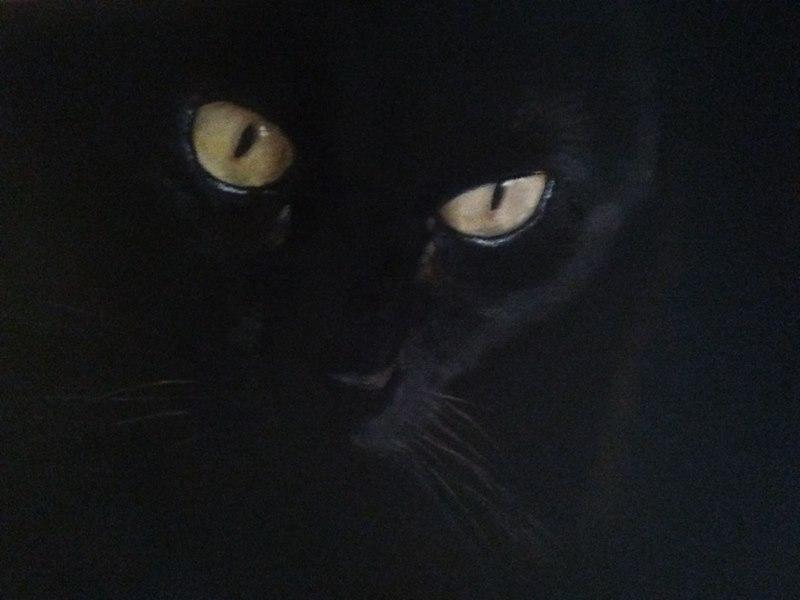 Big Black Cat (2018) - Susana Belda