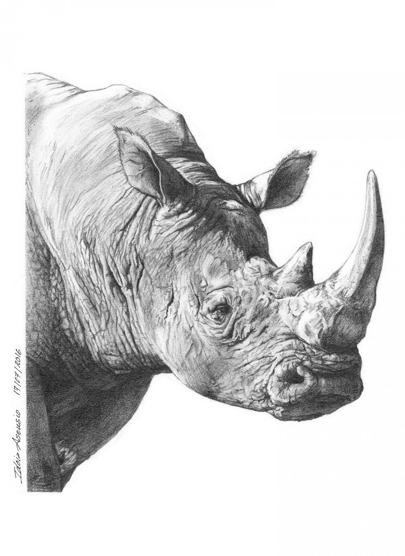 "Serie: ""Animales"" #1 - Rinoceronte (2016) - Idoia Asensio"
