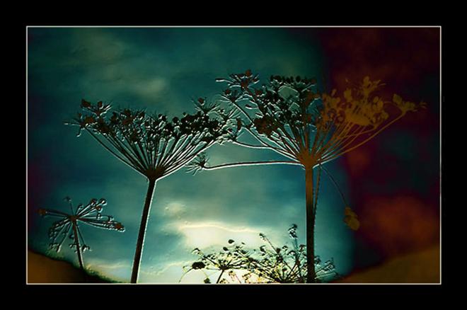 Moon Spell (2010) - Marta Eva LLamera