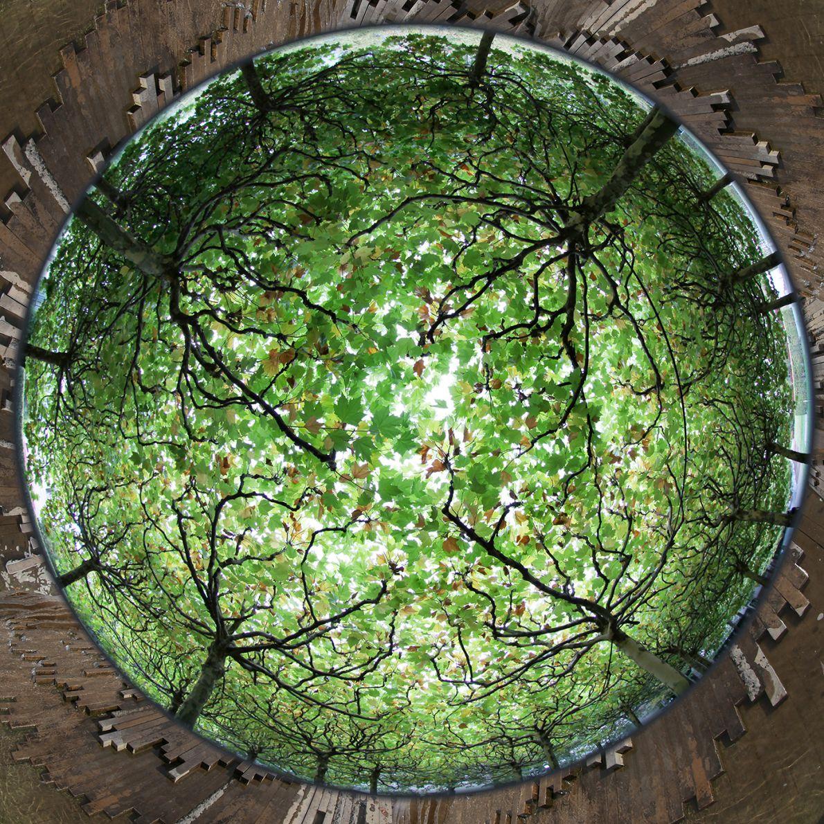 Jardín del placer (2016) - Marina Morris Urruchurtu
