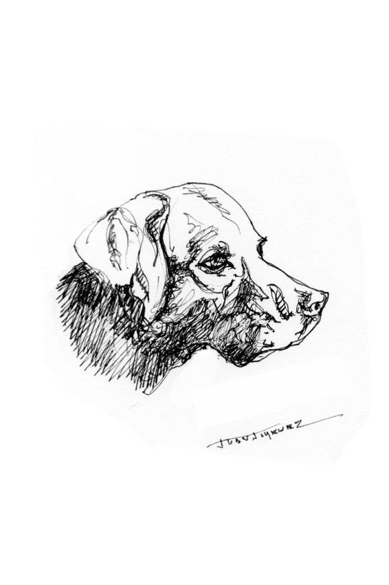 Cabeza de perro: Observando (2020) - Juan Jiménez