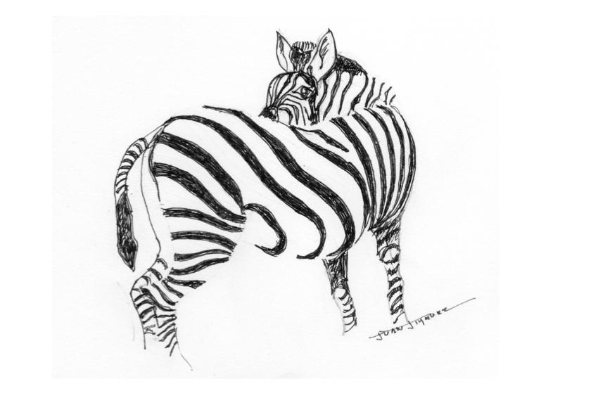 Cebra (2020) - Juan Jiménez