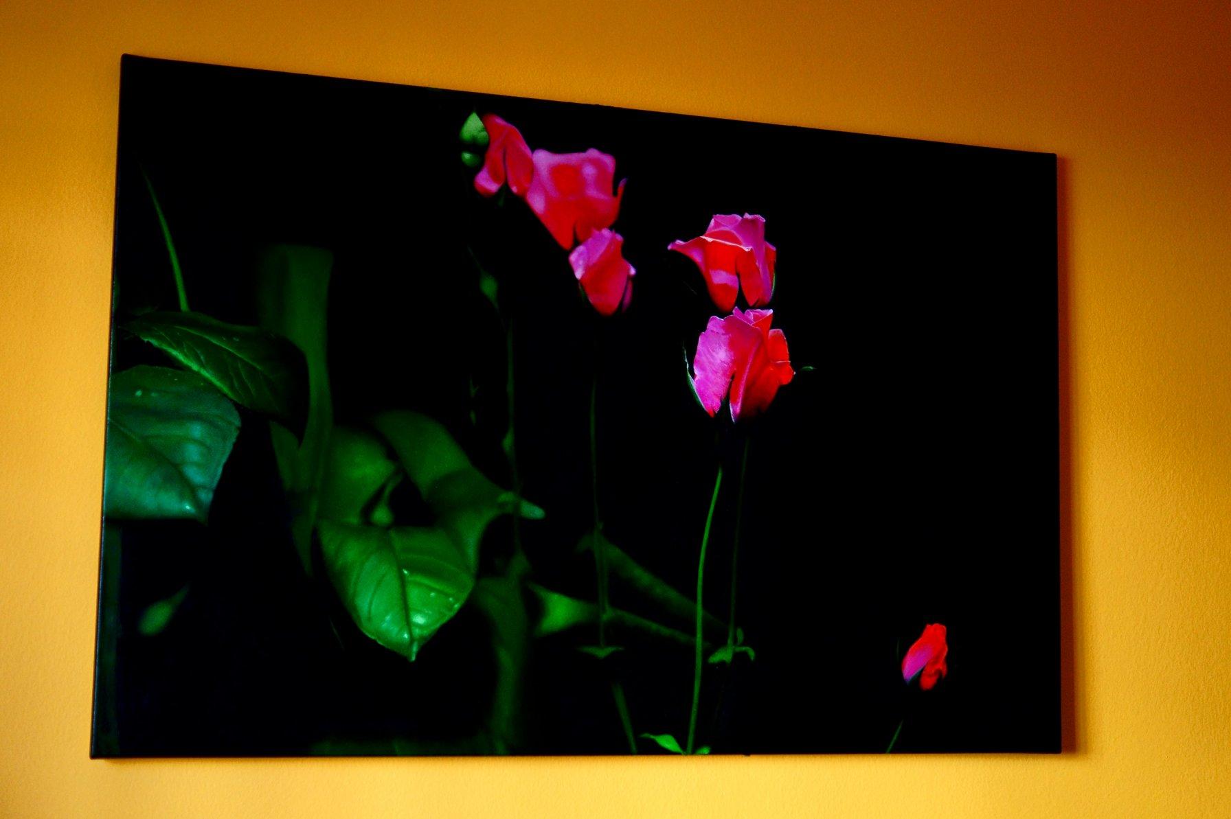 Renacer (2020) - Carles Dalmau Rovirosa
