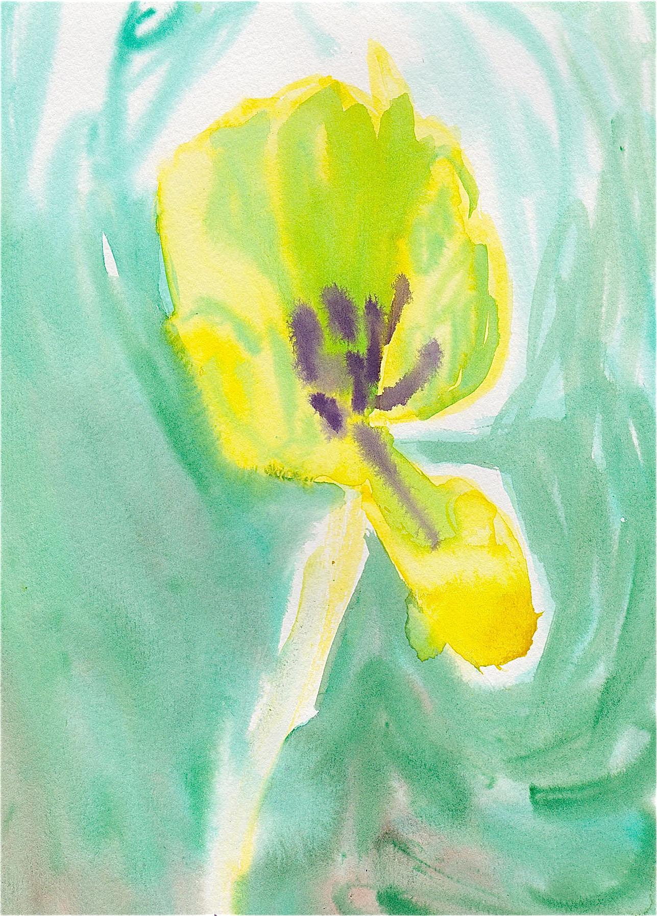 Tulipan (2016) - Katie Mackenzie Ross - Katie Mackenzie