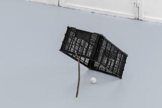 Armadilha para ricos (2019). Plastic box, twig and golf ball, 45x45x30cm