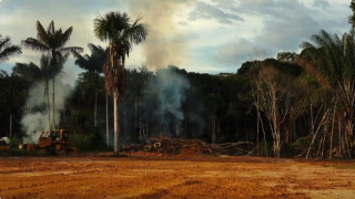 Fotograma del vídeo 'Dystopia of a Jungle city, and the Human of Nature'. Cortesía de la artista