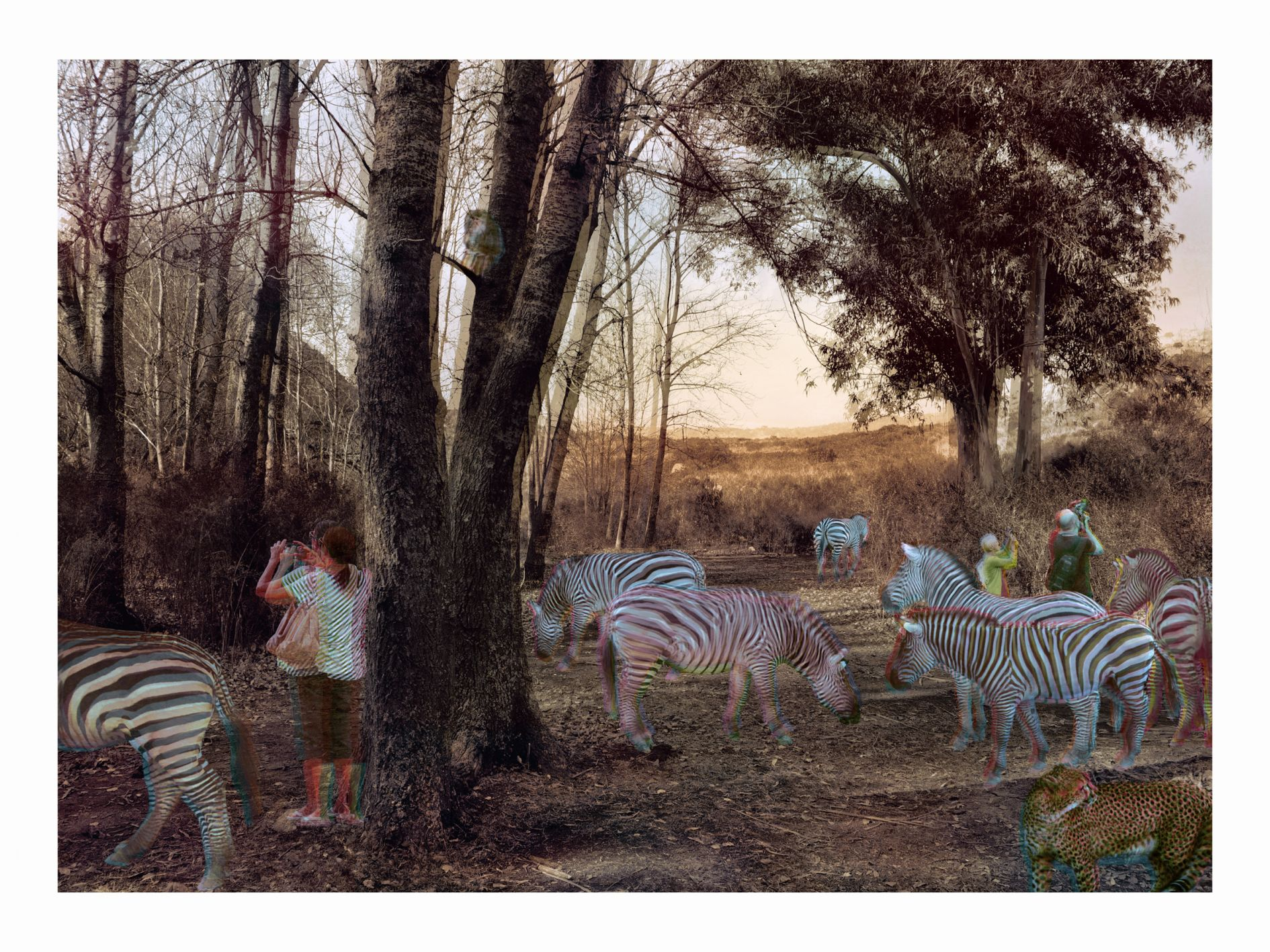 El Recuerdo de las Cebras ( De la Serie El Recuerdo de los Animales ) (2011) - Javier Mazzeo