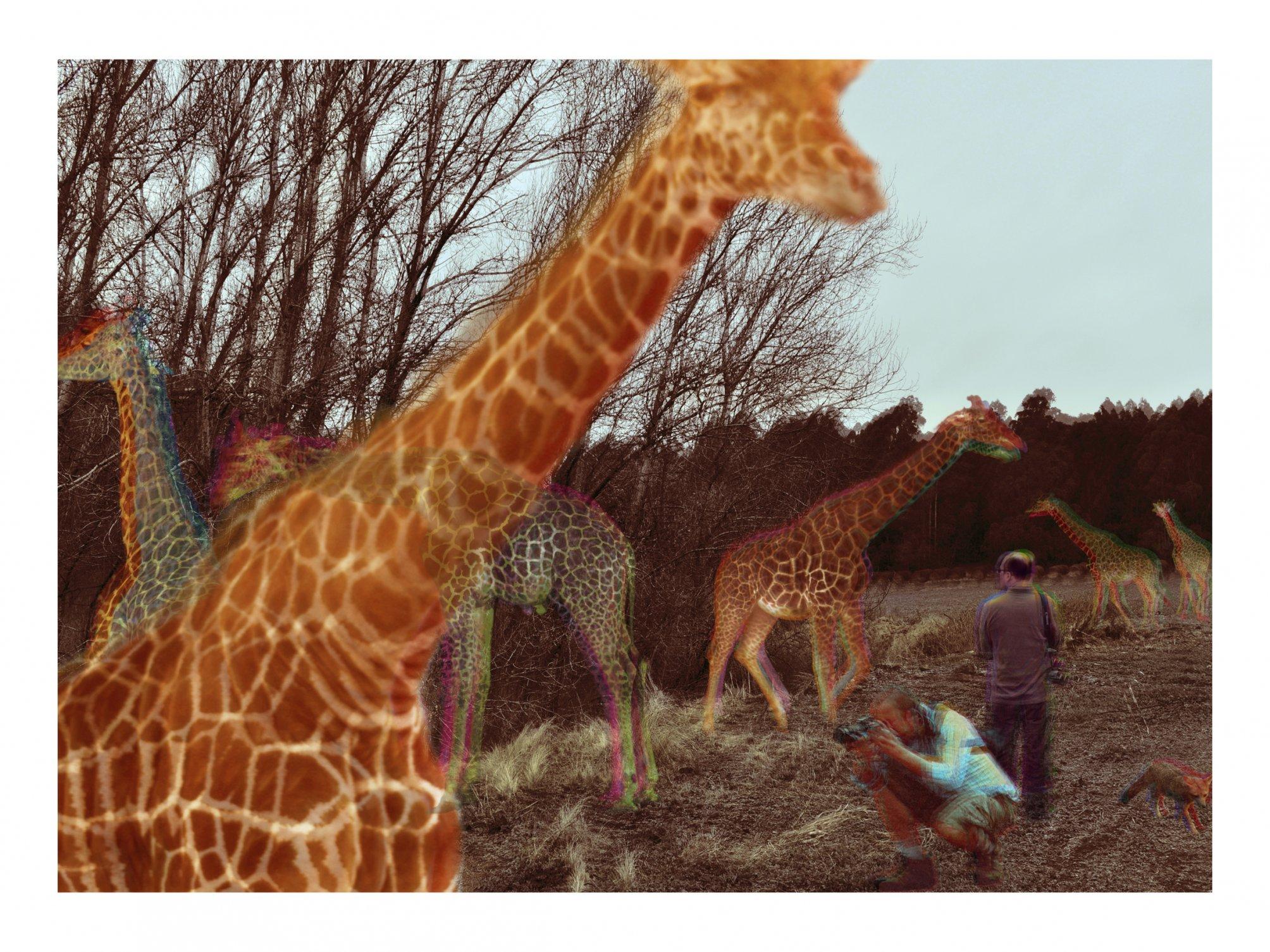 El Recuerdo de las Jirafas ( De la serie El Recuerdo de los Animales )