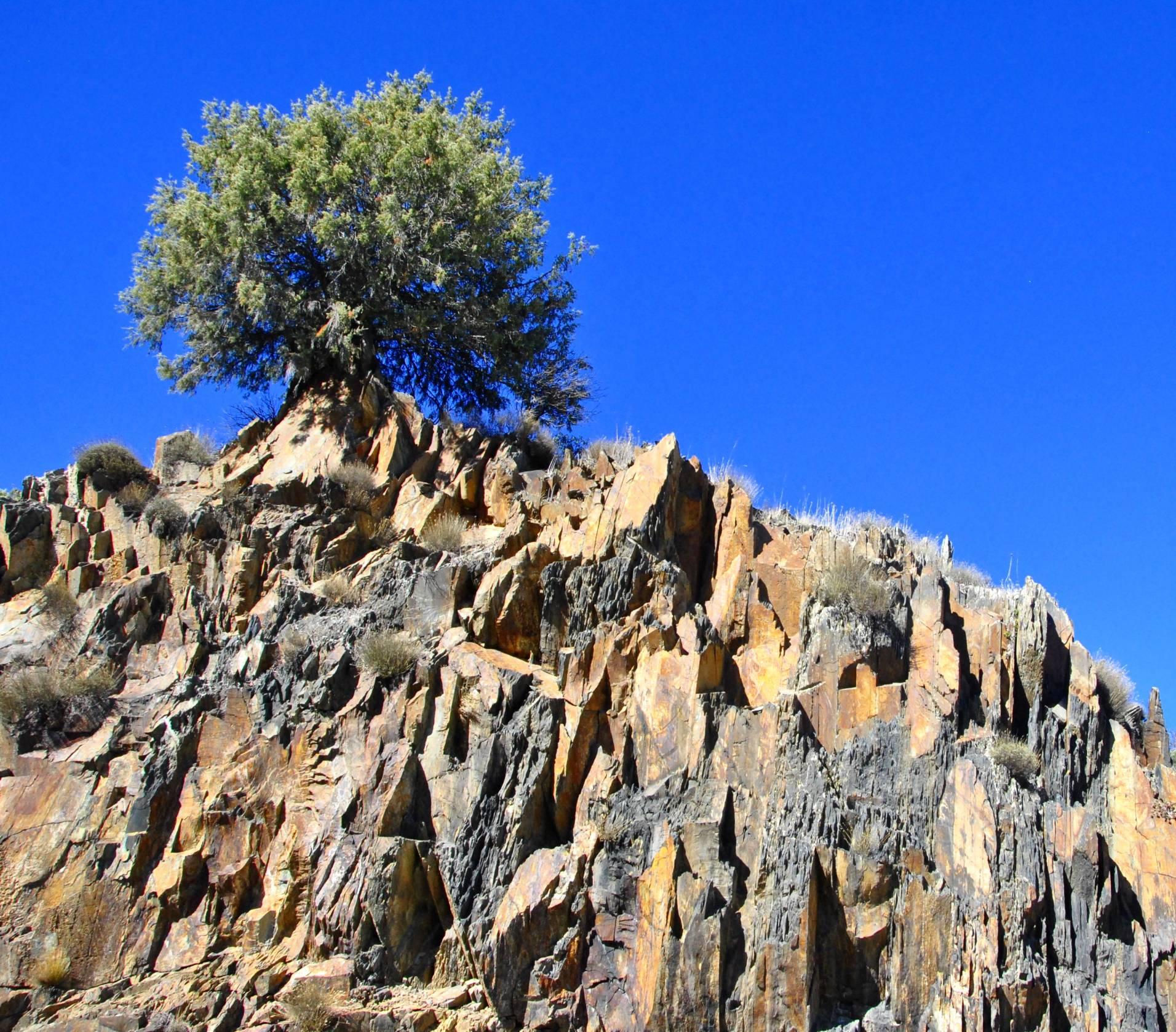 Árbol en la roca