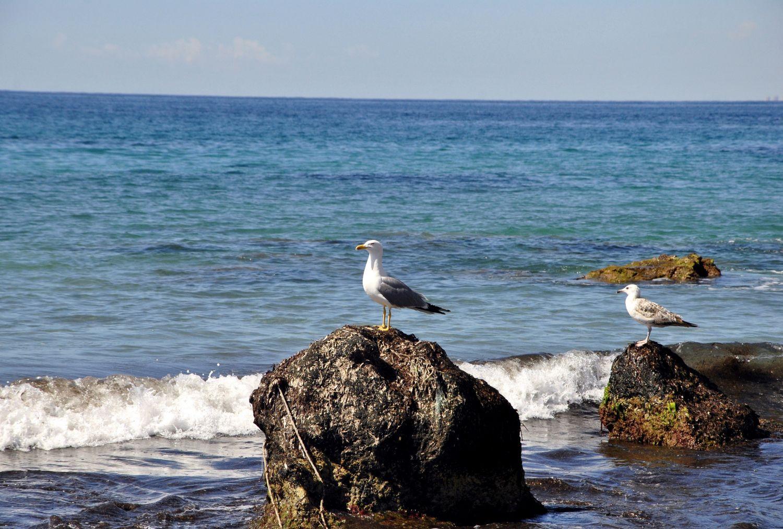 Dos gaviotas. Mar Mediterráneo (2017) - Olena Parkhomenko