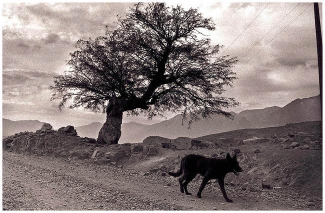 Camino del Algarrobo