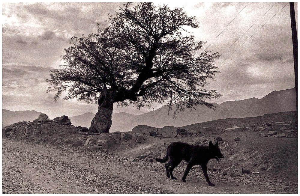 Camino del Algarrobo (1995) - Ramón Ángel Acevedo Arce - Rakar