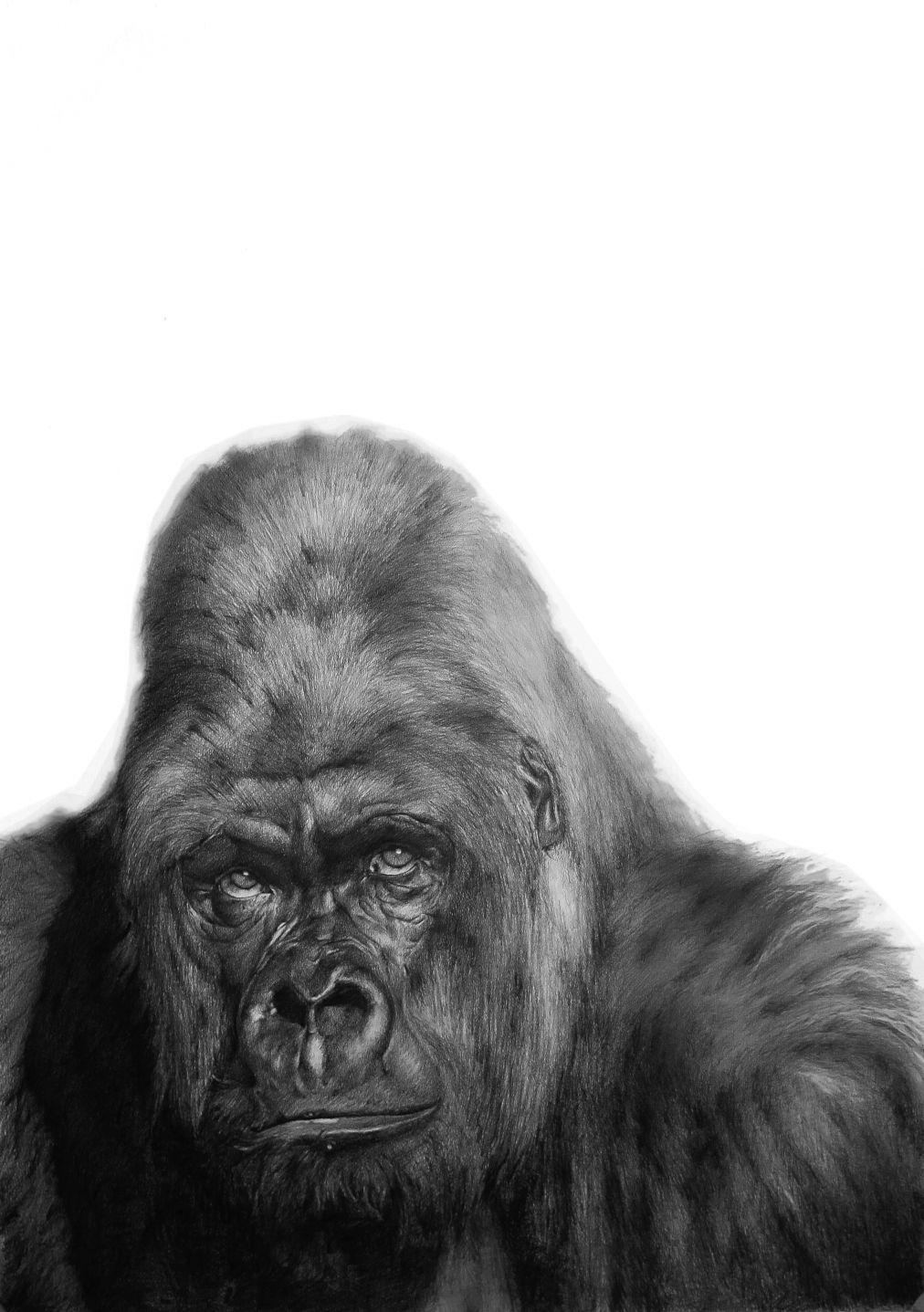 Gorila. (2016) - Aythamy Armas