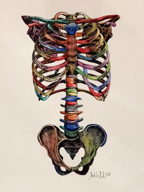 Colours skeleton