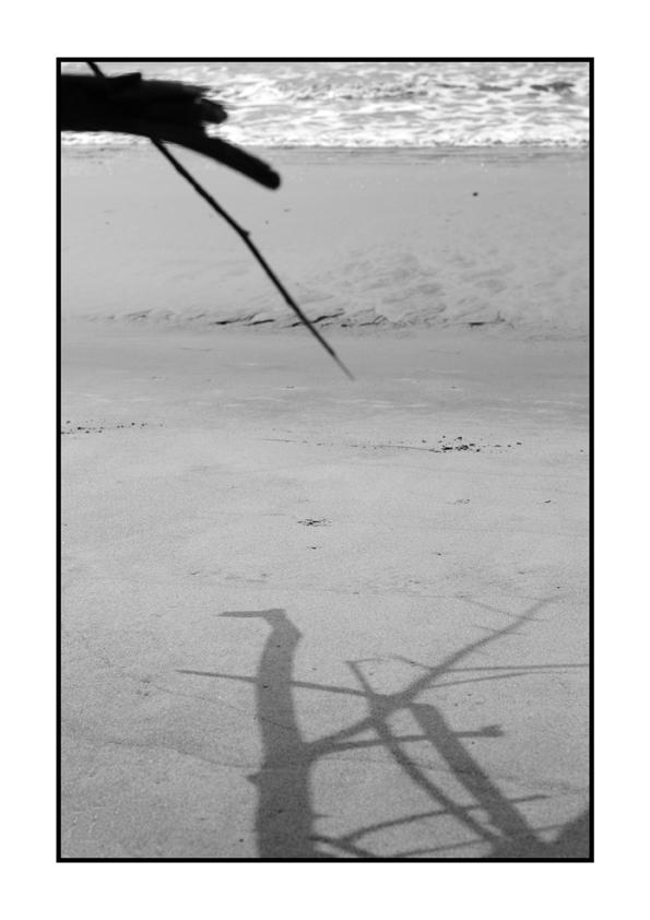 Ombres a la platja (2015) - Carmen Riu de Martín