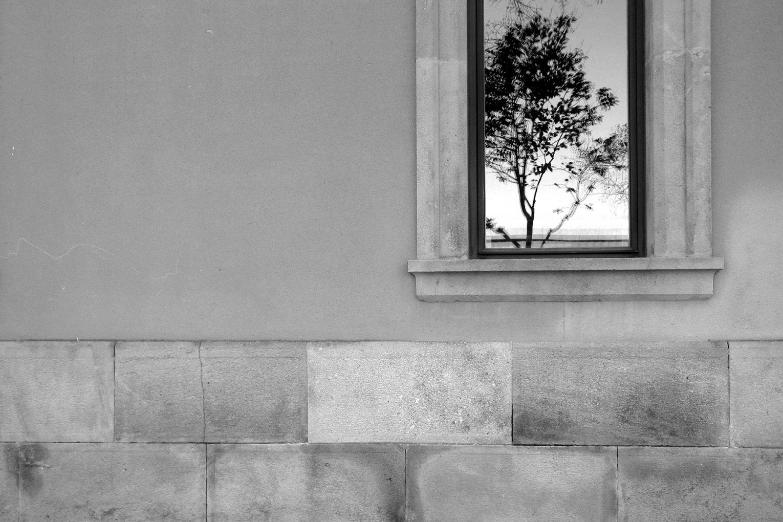 """Plantes d'interior"" (2015) - Xavier Erruz"