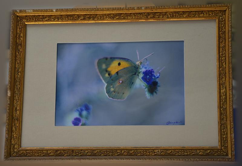 Mariposa en flor (2015) - Benjamin Santos - Benji Santos