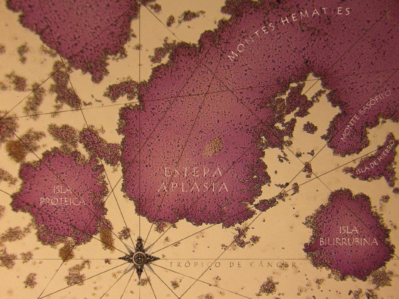 Mapa interior IV (2019) - Luis Alberto Romero