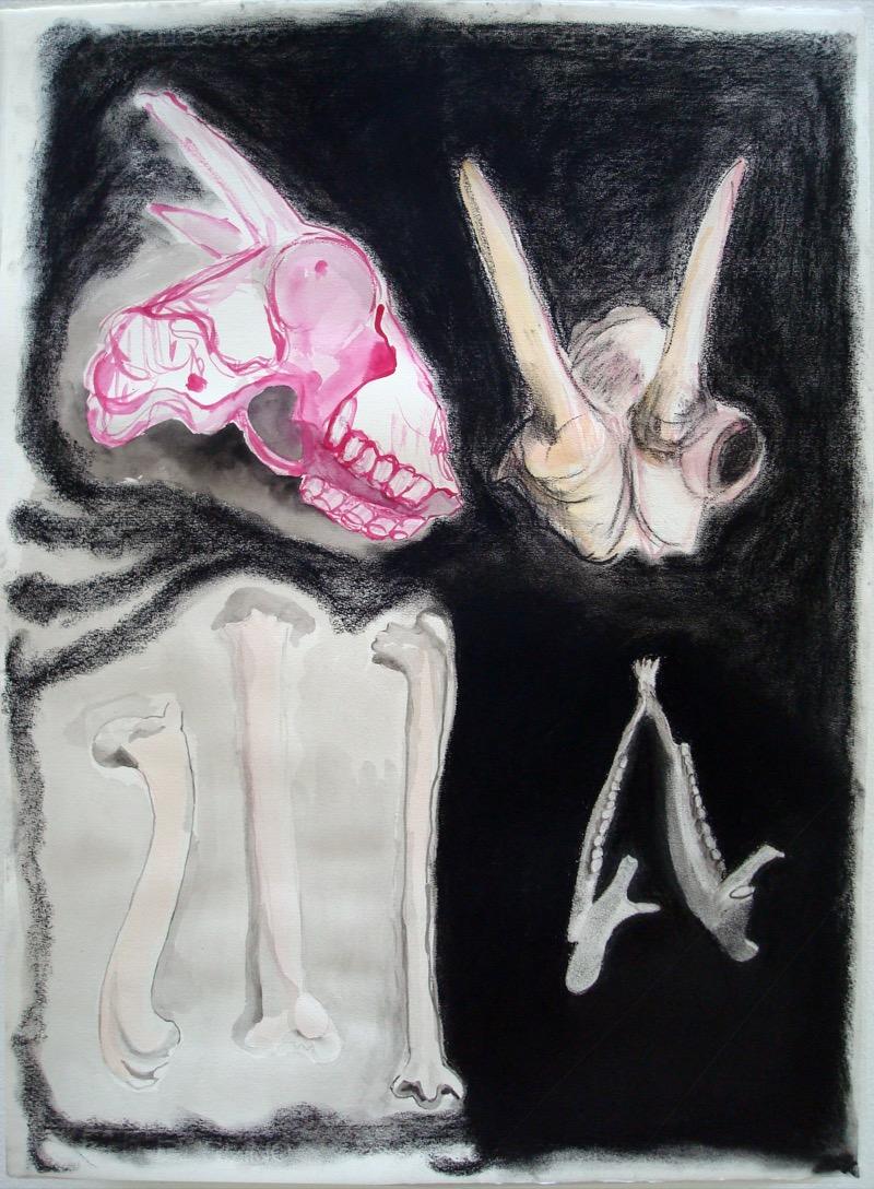 No Title (bones-skull)