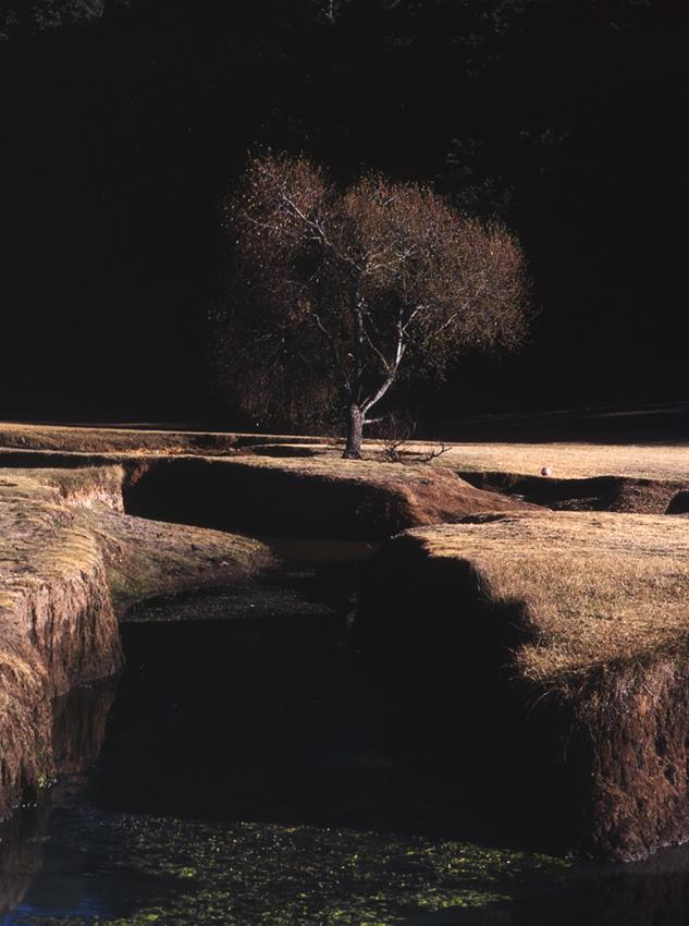 Souvenir (2011) - Elizabeth Vinck Monroy