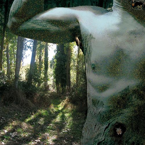 Fusión (Serie Naturaleza Humana) (2016) - Alonso de Sousa