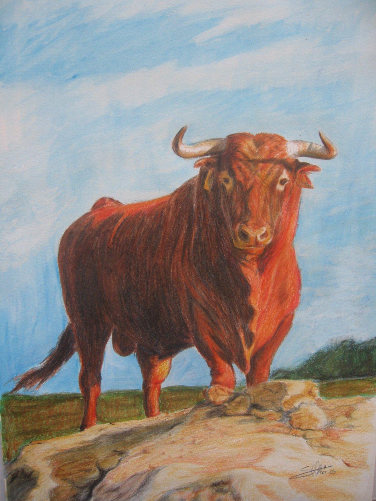 Toro colorao (2005) - Alonso de Sousa