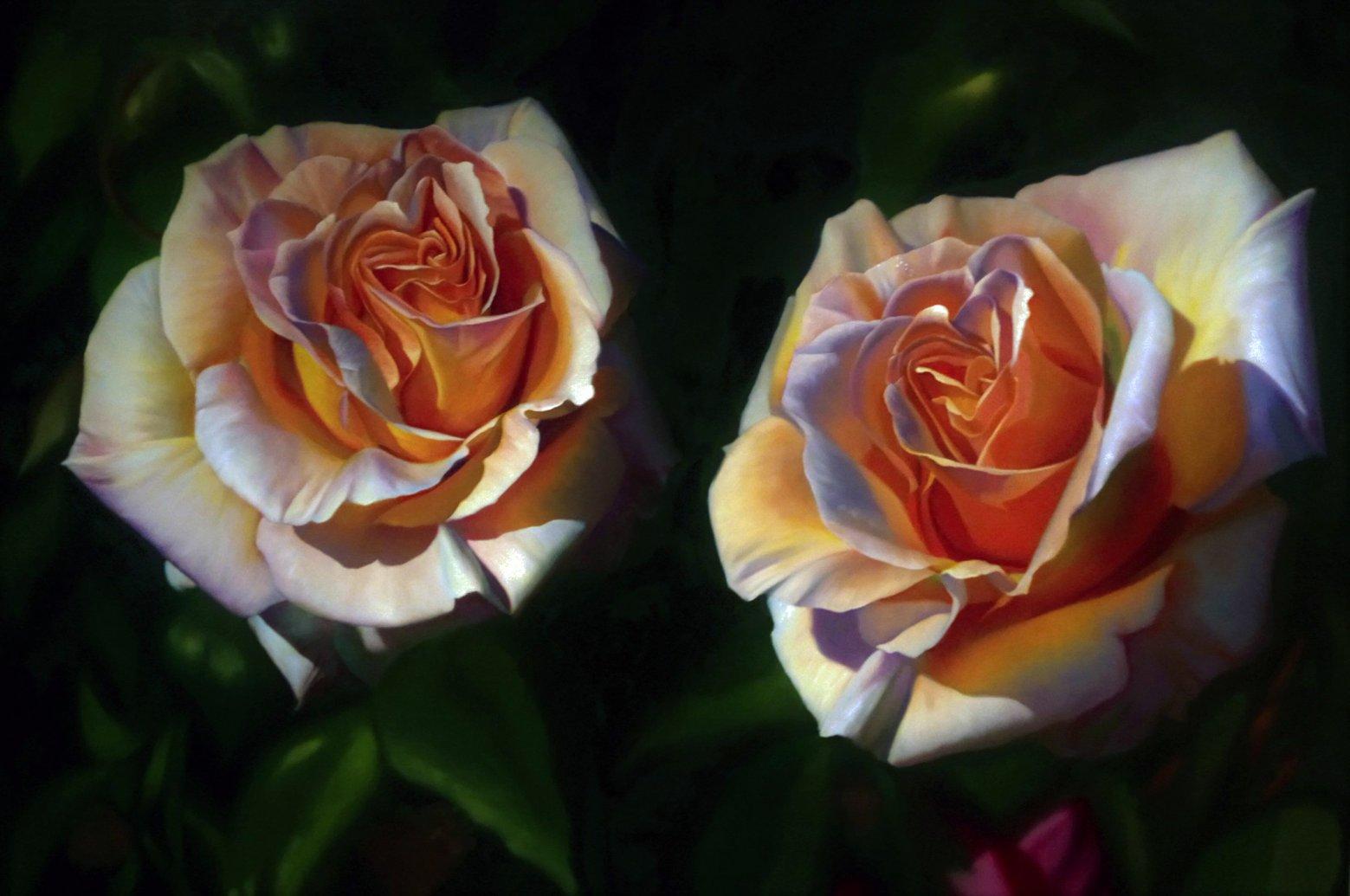Rosas de mi jardín I (2019) - Enrique Donoso